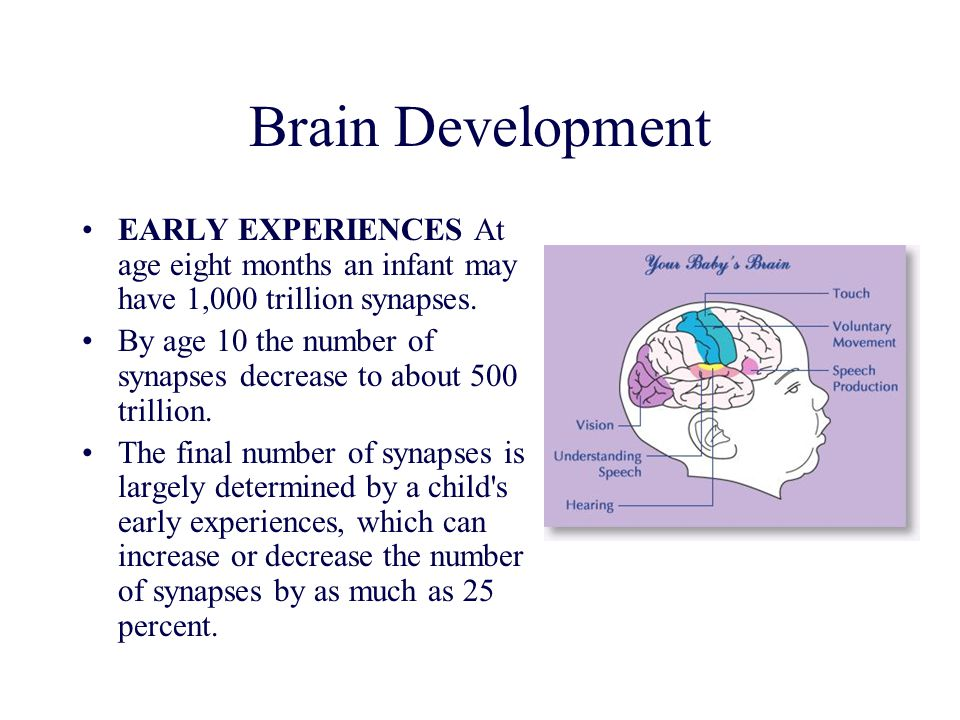 Brain Development EARLY EXPERIENCES At age eight months an infant may have 1,000 trillion synapses.