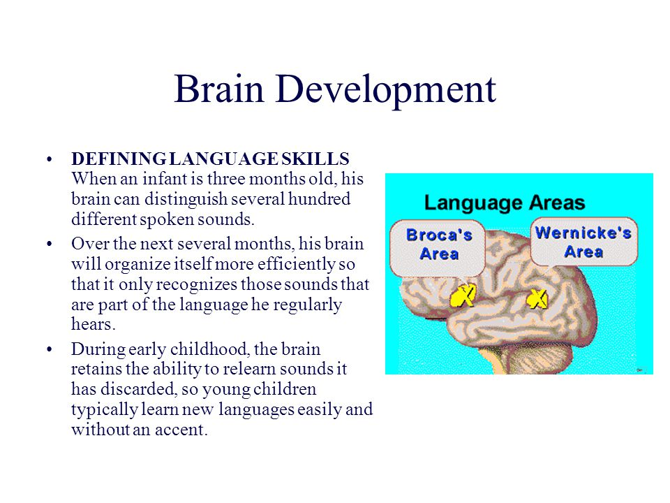 Brain Development DEFINING LANGUAGE SKILLS When an infant is three months old, his brain can distinguish several hundred different spoken sounds.