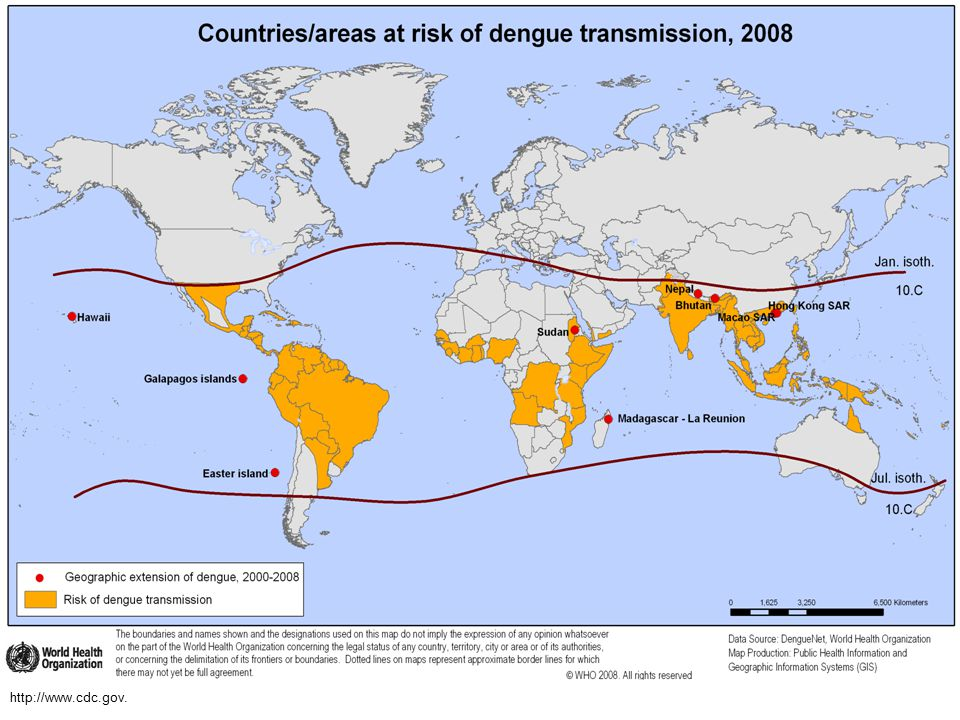 DENGUE is present between 35 degrees north and south of the equator