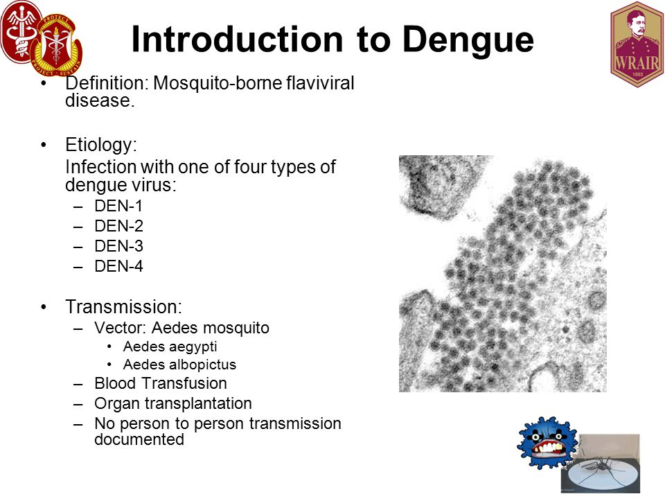 Introduction to Dengue