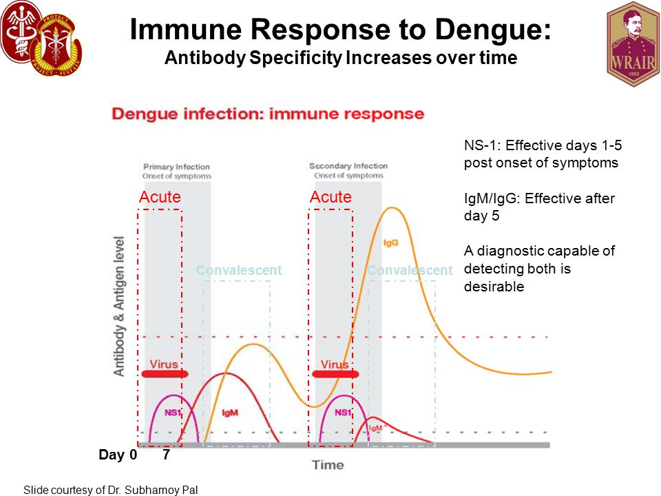 Immune Response to Dengue: Antibody Specificity Increases over time