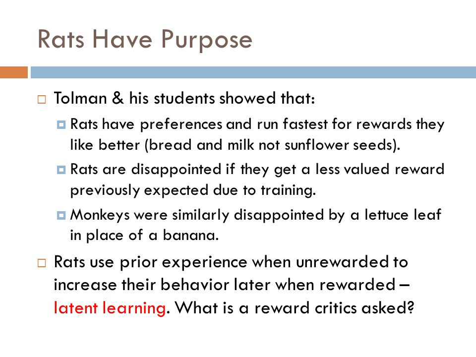 Rats Have Purpose Tolman & his students showed that:
