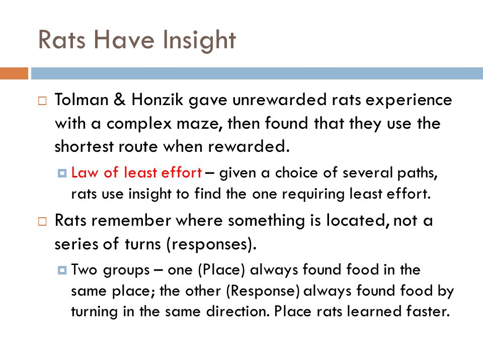 Rats Have Insight Tolman & Honzik gave unrewarded rats experience with a complex maze, then found that they use the shortest route when rewarded.