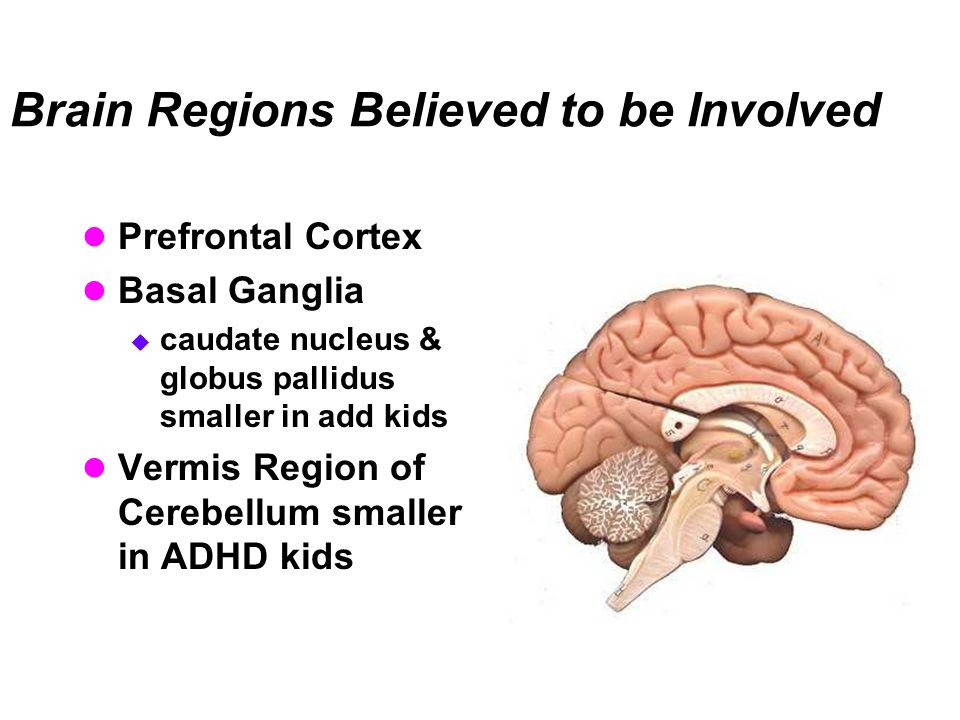 Brain Regions Believed to be Involved