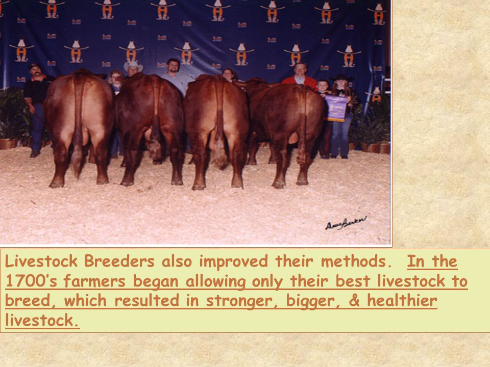 Livestock Breeders also improved their methods