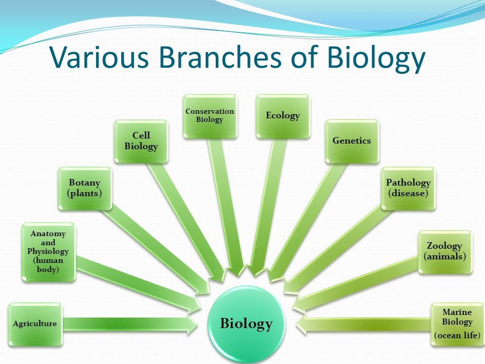 Study branches of biology