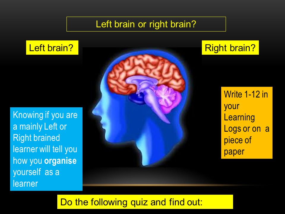 Left brain or right brain