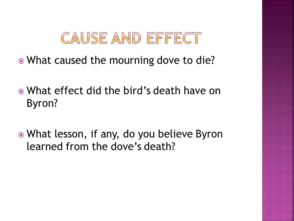 Cause and Effect What caused the mourning dove to die