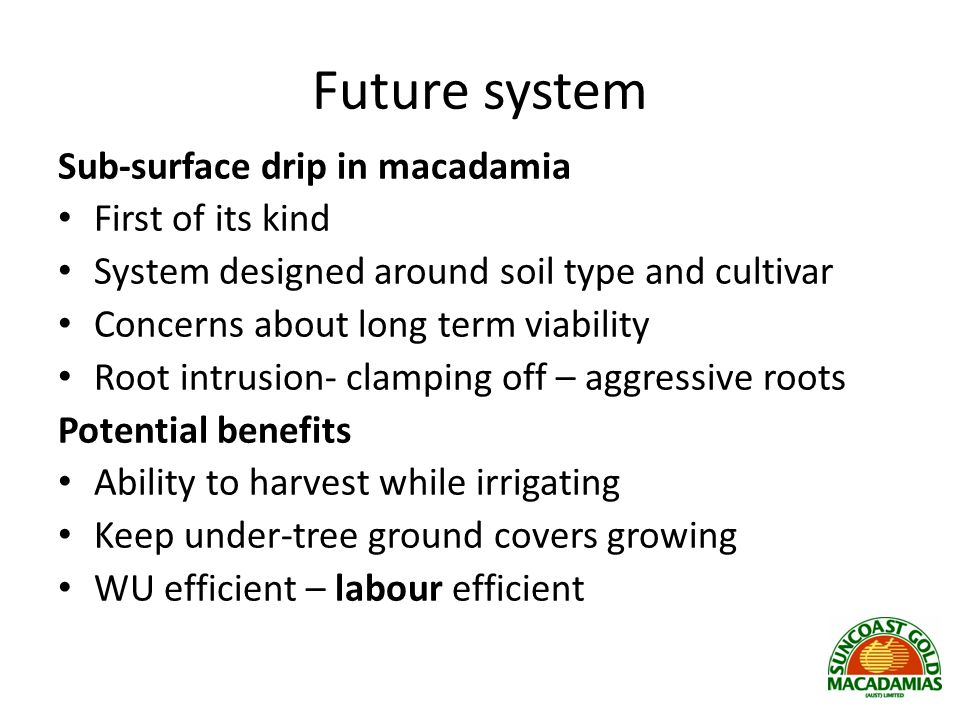 Future system Sub-surface drip in macadamia First of its kind