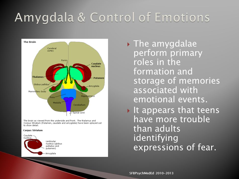 Amygdala & Control of Emotions