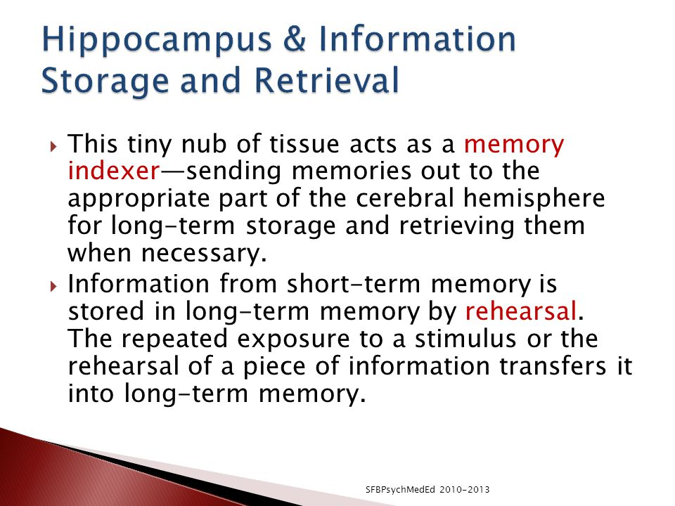 Hippocampus & Information Storage and Retrieval