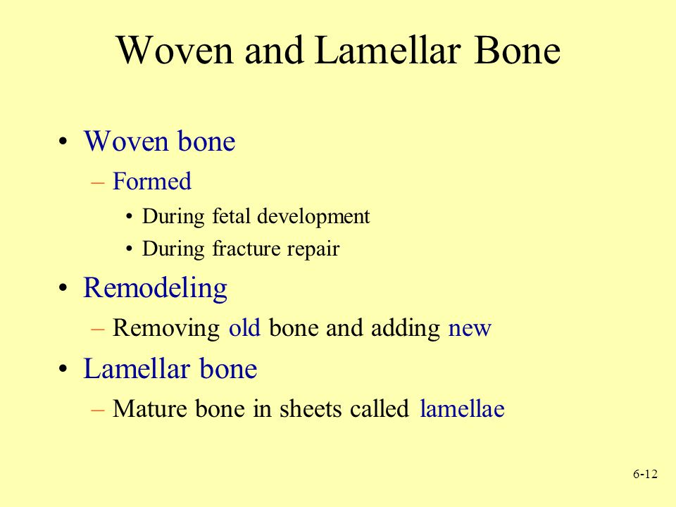 Woven and Lamellar Bone