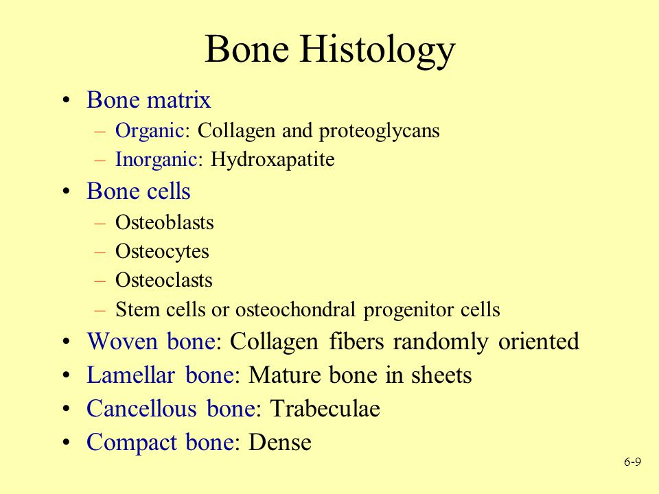 Bone Histology Bone matrix Bone cells