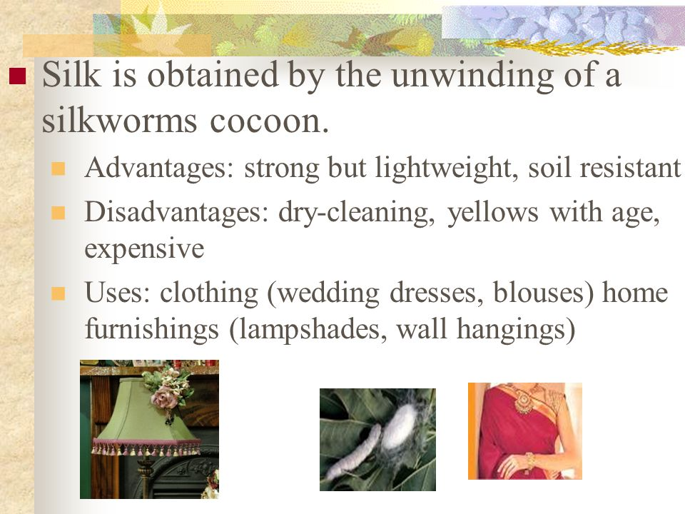 Silk is obtained by the unwinding of a silkworms cocoon.