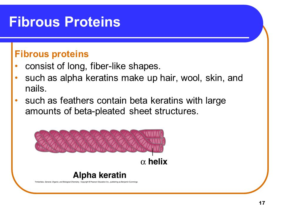 Fibrous Proteins Fibrous proteins consist of long, fiber-like shapes.