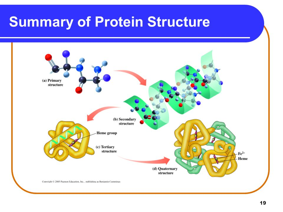 Summary of Protein Structure