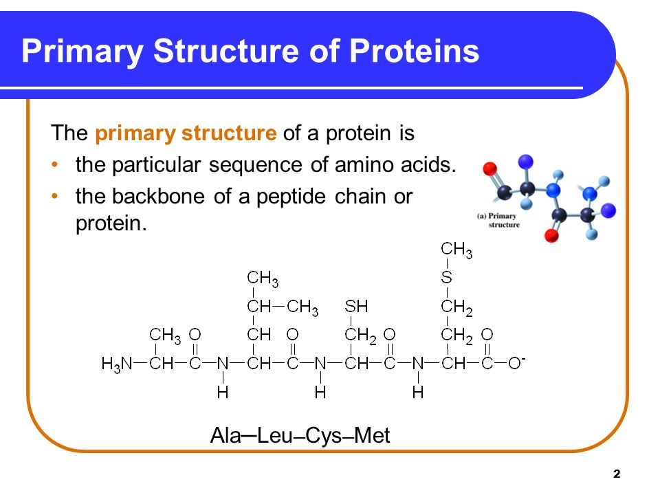 Primary Structure of Proteins