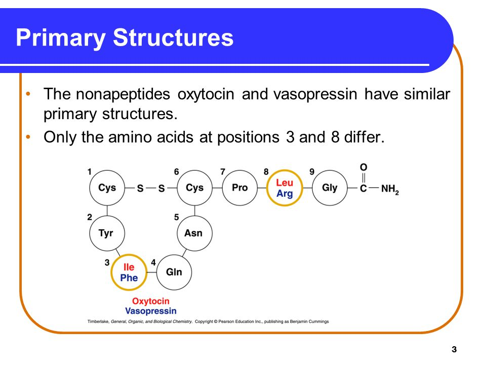 Primary Structures The nonapeptides oxytocin and vasopressin have similar primary structures.
