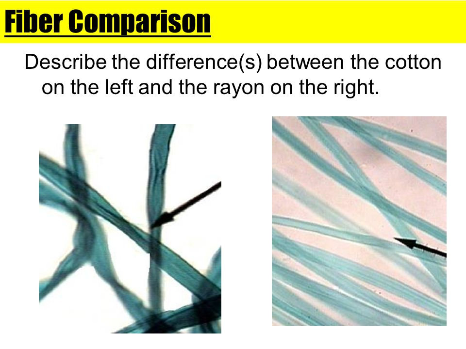 Fiber Comparison Describe the difference(s) between the cotton on the left and the rayon on the right.