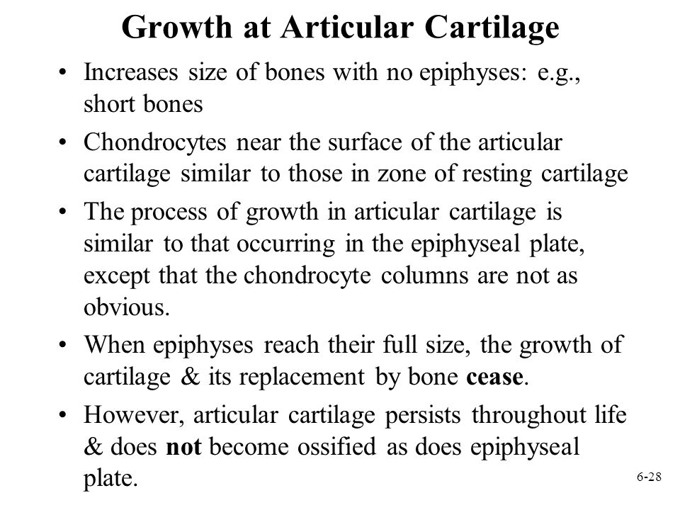 Growth at Articular Cartilage