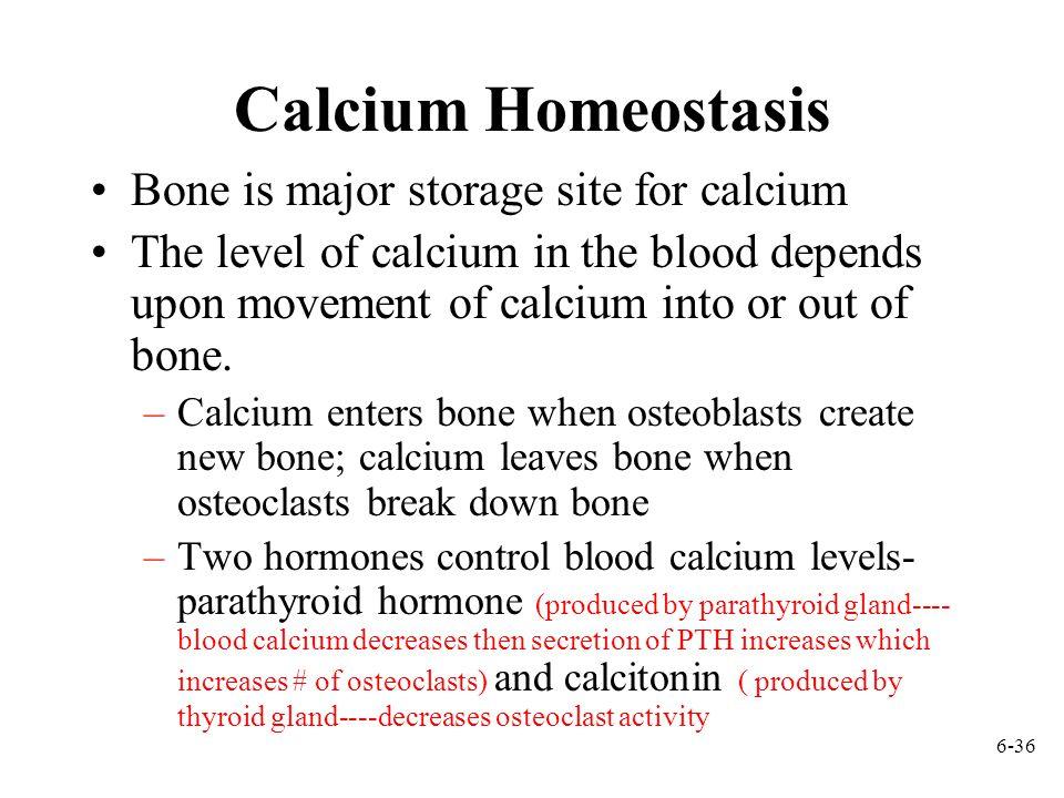 Calcium Homeostasis Bone is major storage site for calcium