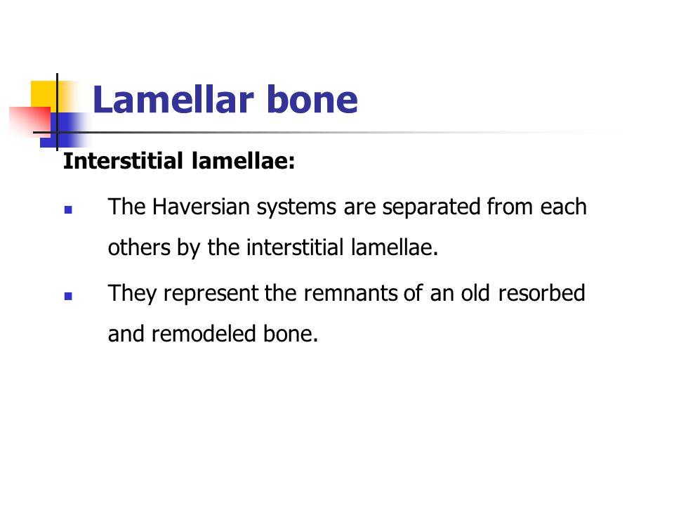 Lamellar bone Interstitial lamellae: