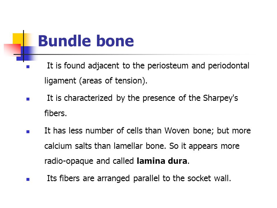 Bundle bone It is found adjacent to the periosteum and periodontal ligament (areas of tension).