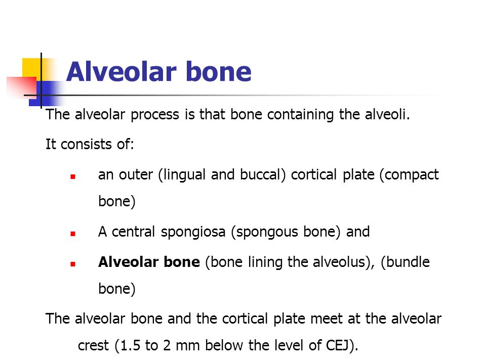 Alveolar bone The alveolar process is that bone containing the alveoli. It consists of: an outer (lingual and buccal) cortical plate (compact bone)