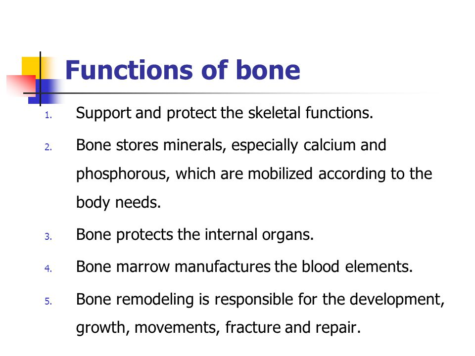 Functions of bone Support and protect the skeletal functions.