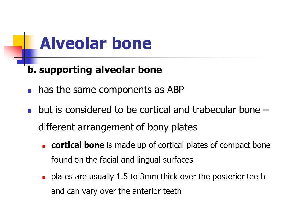 Alveolar bone b. supporting alveolar bone
