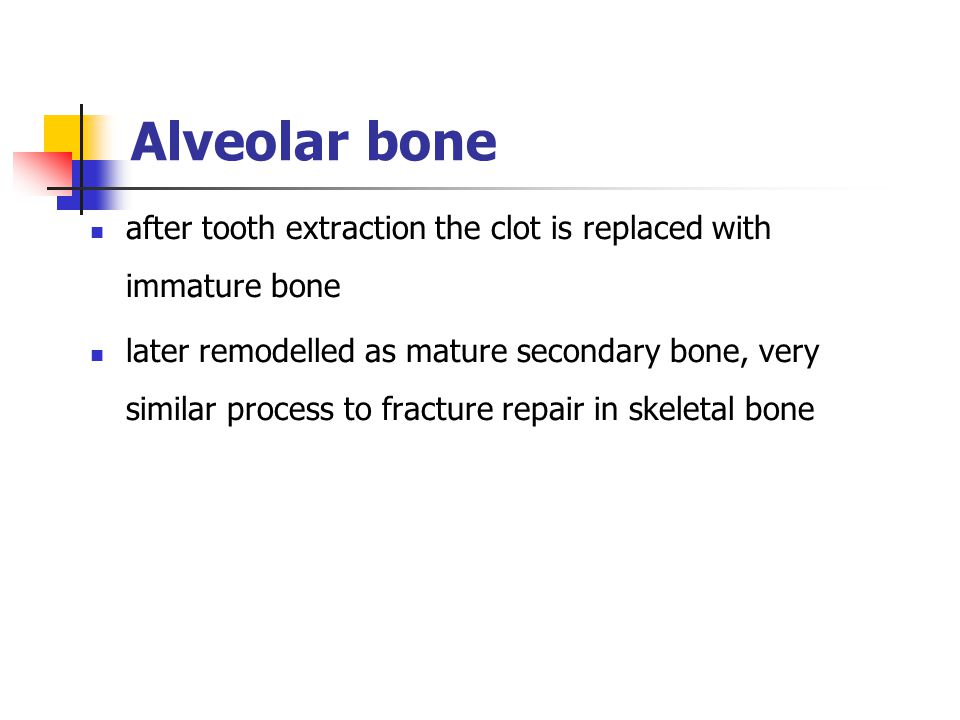 Alveolar bone after tooth extraction the clot is replaced with immature bone.