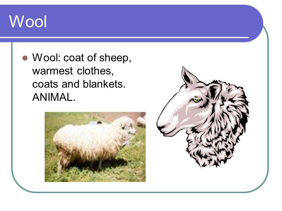 Wool Wool: coat of sheep, warmest clothes, coats and blankets. ANIMAL.