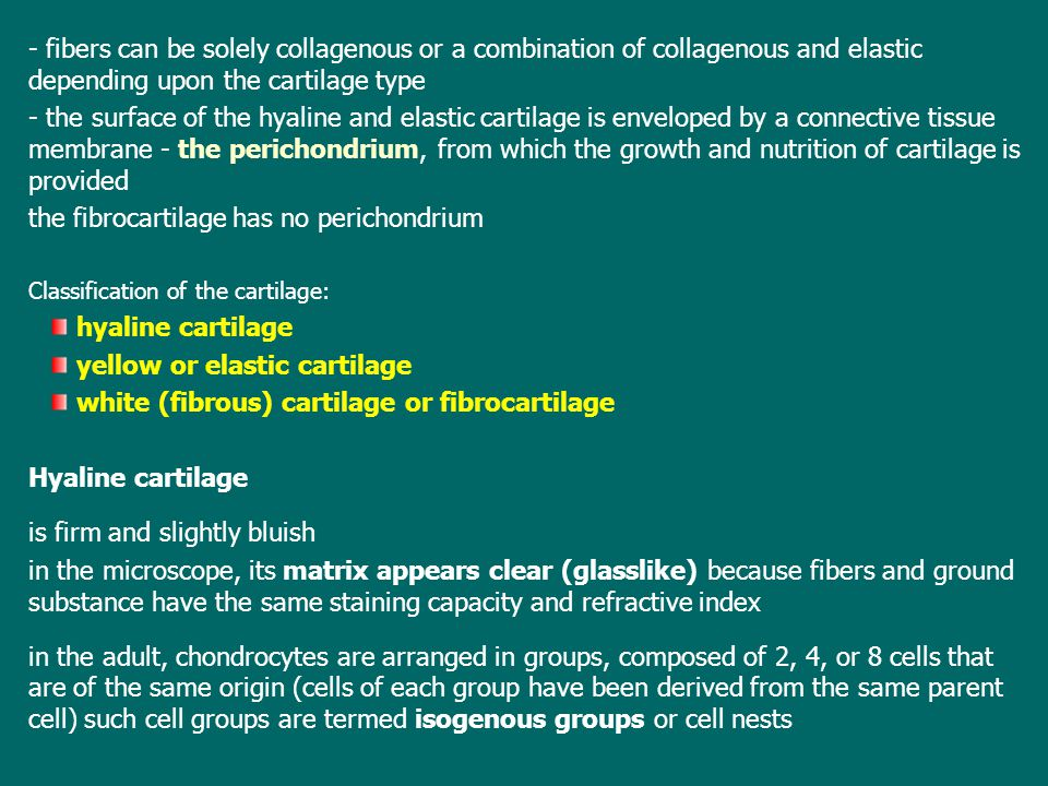 the fibrocartilage has no perichondrium
