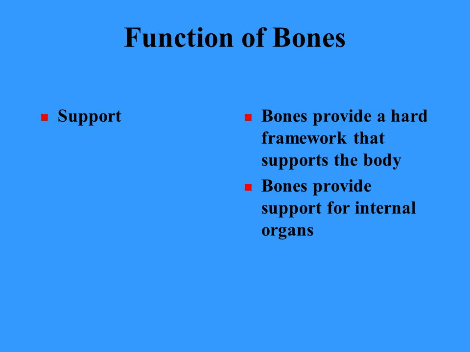 Function of Bones Support