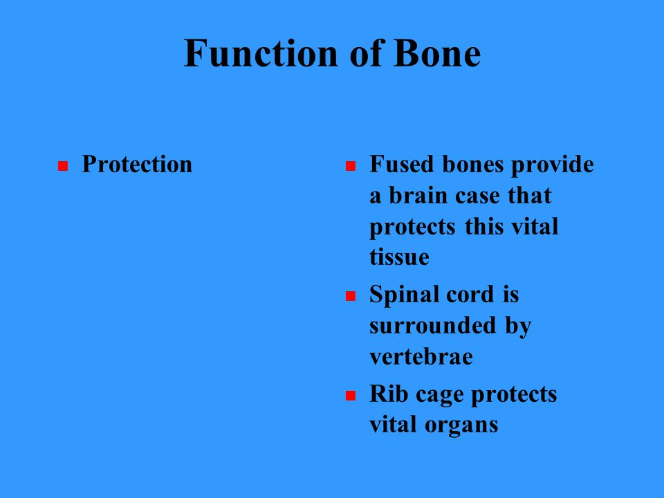 Function of Bone Protection