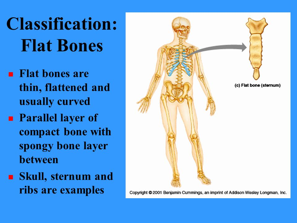 Classification: Flat Bones