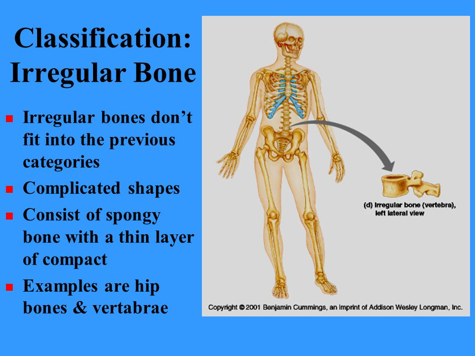 Classification: Irregular Bone