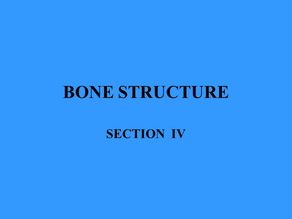 BONE STRUCTURE SECTION IV
