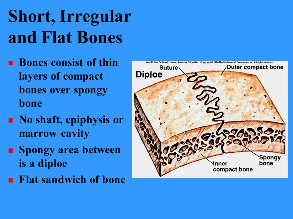 Short, Irregular and Flat Bones
