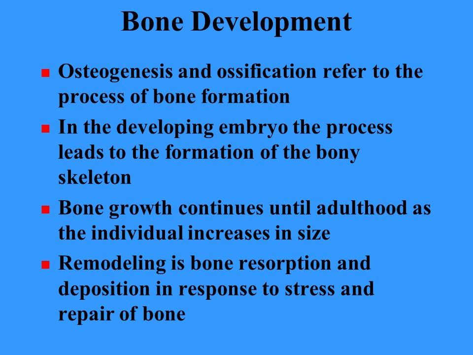 Bone Development Osteogenesis and ossification refer to the process of bone formation.
