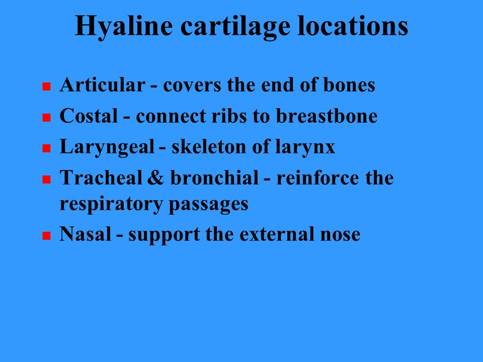Hyaline cartilage locations