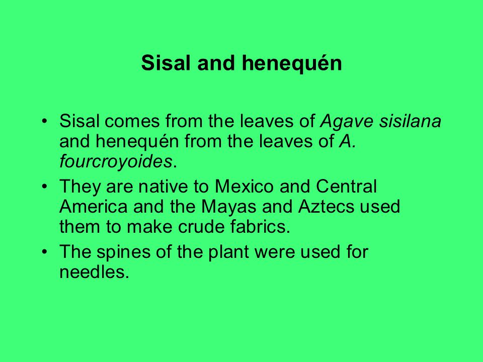Sisal and henequén Sisal comes from the leaves of Agave sisilana and henequén from the leaves of A. fourcroyoides.
