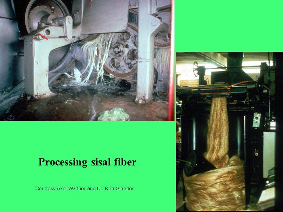 Processing sisal fiber