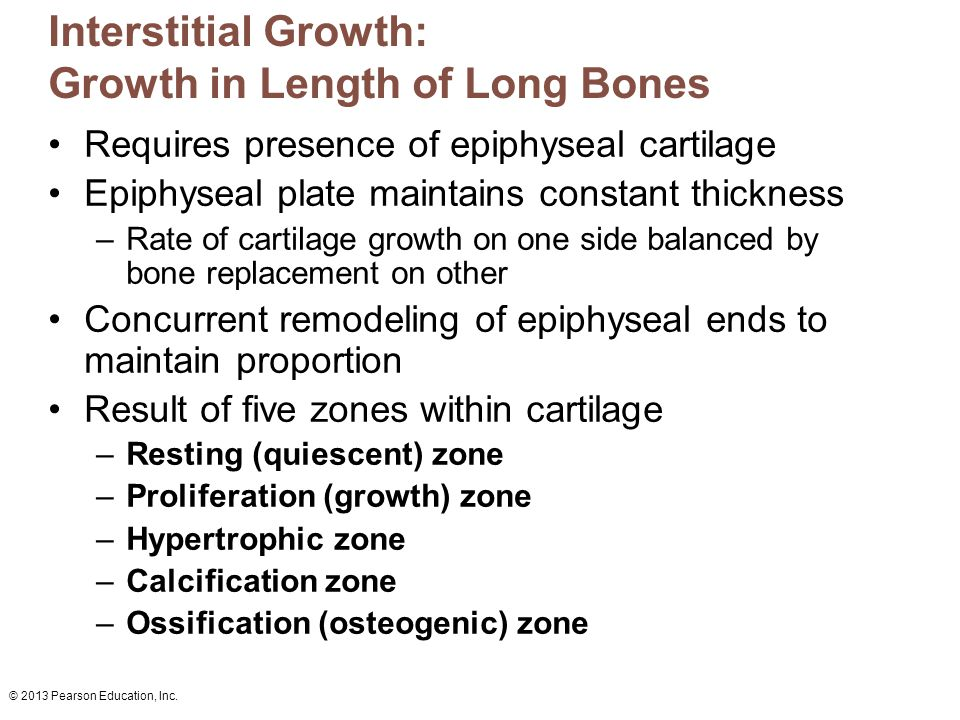 Interstitial Growth: Growth in Length of Long Bones