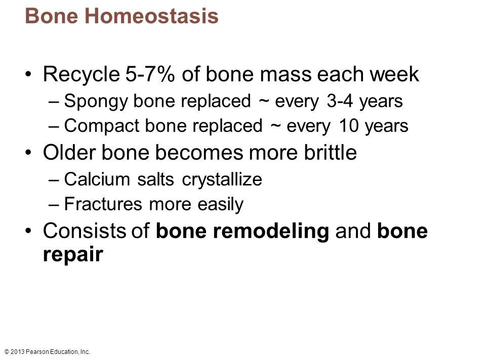 Recycle 5-7% of bone mass each week