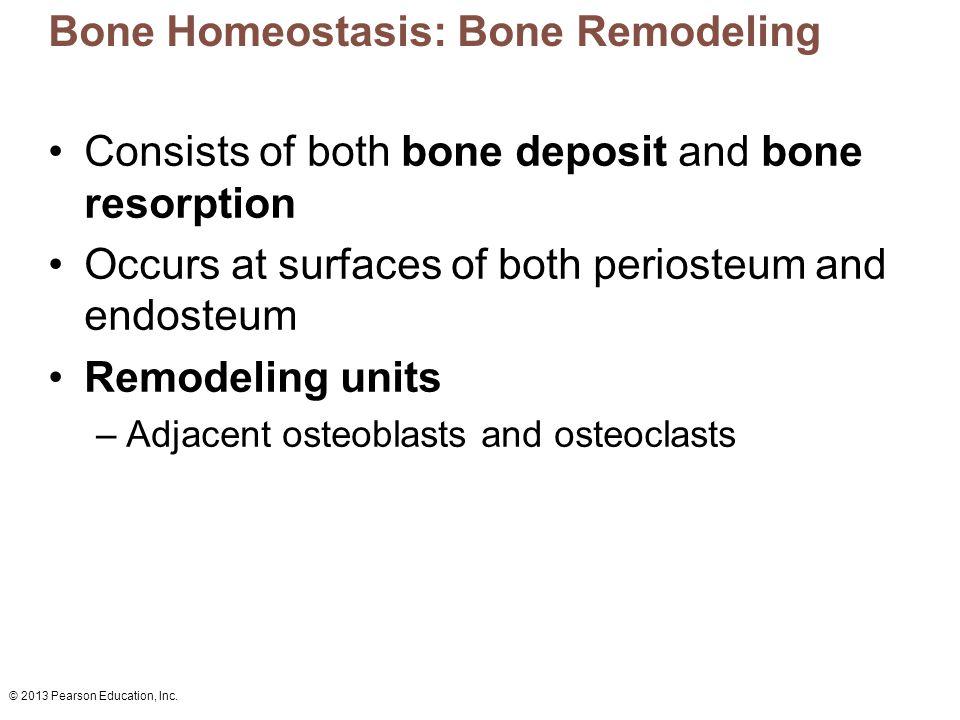 Bone Homeostasis: Bone Remodeling