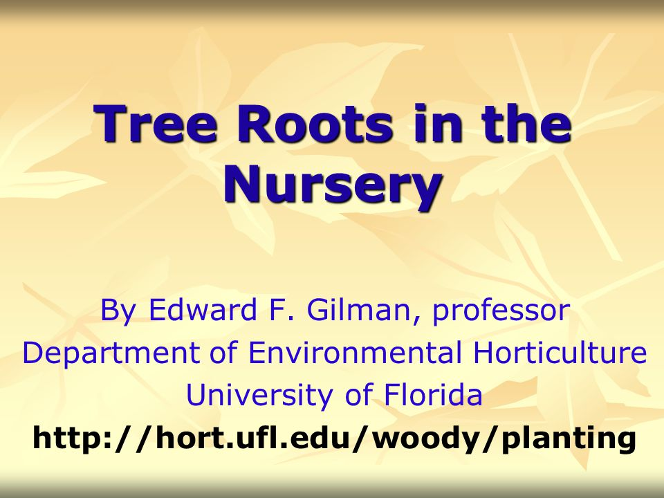 Tree Roots in the Nursery