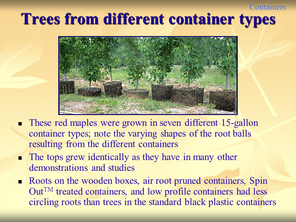 Trees from different container types