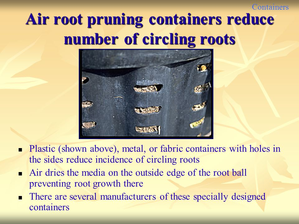 Air root pruning containers reduce number of circling roots