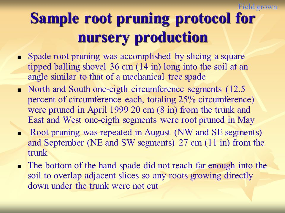 Sample root pruning protocol for nursery production